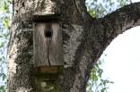 lidkoping-20120526-27-001