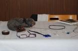 nbv-tillsammans-lidkoping-20121006-022