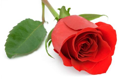 En ros för Elvira och alla kvinnor utsatta för våld
